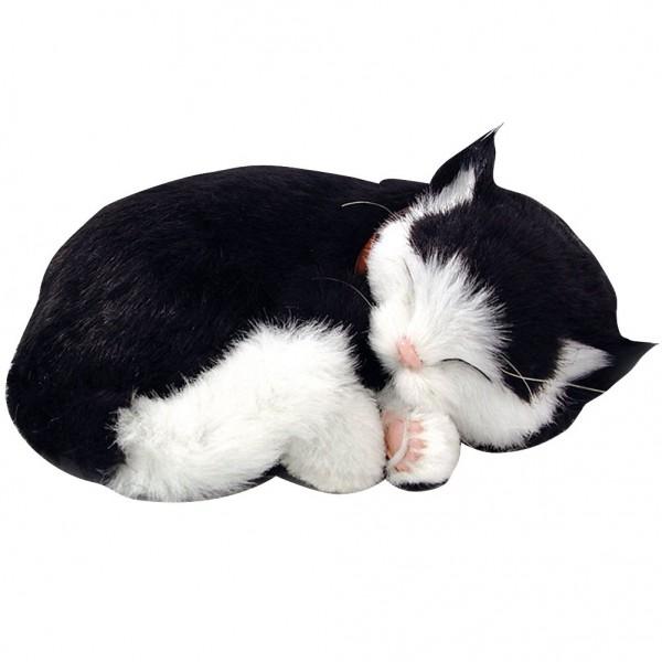 Atimals Katze